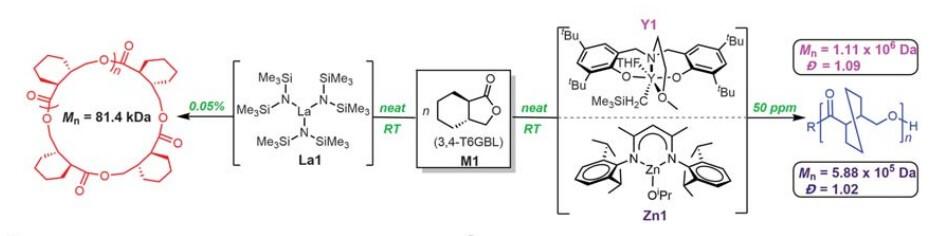 Схема полимеризации γ-бутиролактона при комнатной температуре