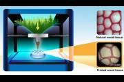 Специальные «чернила» для 3D-принтера позволят печатать предметы из дерева