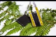 Листья папоротника вдохновили ученых на создание уникальных электродов