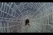 Сверхпрочная паутина